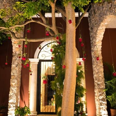Arbol que da el nombre a una de las haciendas más bonitas de Mérida